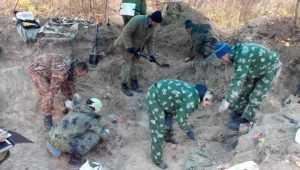 В Рогнединском районе обнаружили останки погибшего в 1943 году бойца