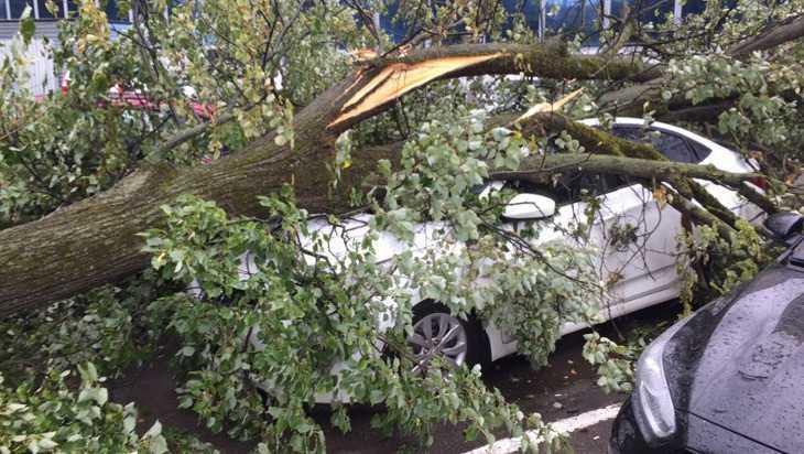 В Брянске ураганный ветер повалил дерево на машину и оборвал провода