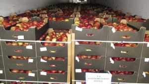 Брянцы выдали польские яблоки за пиво и минералку