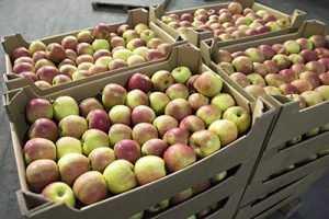 Брянские таможенники задержали свыше 100 тонн контрабандных яблок