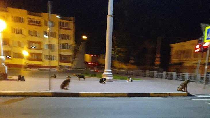 По ночам набережная Брянска стала собачьей территорией