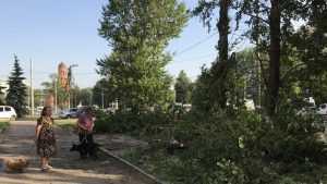 В Брянске около «Самолета» стали выпиливать деревья