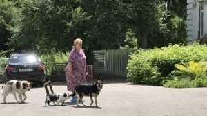 Жительница Брянска сколотила отряд из дружелюбных собак и гордых кошек