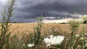 На Брянскую область 12 июля снова обрушатся грозы