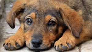 В Жирятине чиновников обвинили в нежелании отлавливать бродячих собак