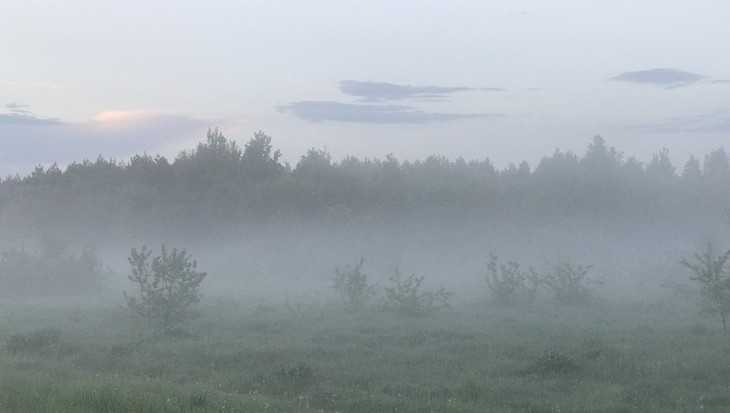 Брянскую область накроют туманы