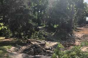В Брянске в Круглом сквере спилили несколько деревьев