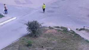 Брянские чиновники сочли заботу о сохранении зелени нецелесообразной