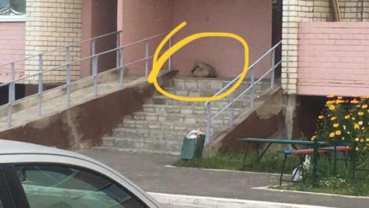 Жильцы брянской многоэтажки испугались «бомбы» в бесхозном мешке
