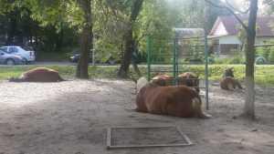 Жители Брянска встали на защиту захвативших детскую площадку лошадей