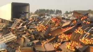 В Брянской области раздавили 123 тонны ягод, фруктов и овощей