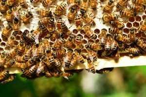 Названа колоссальная сумма ущерба из-за гибели в России пчел