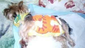 В Клинцах пьяный мужчина упал в подъезде на собаку и покалечил ее