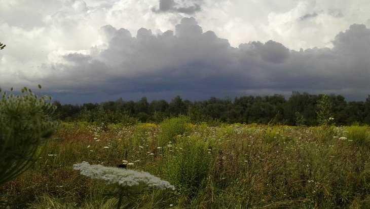 Брянской области 18 июля пообещали грозу и 23-градусное тепло