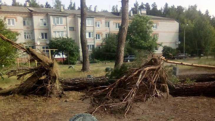 В Климове ураган с корнем вырвал множество деревьев
