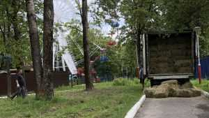 В Брянском зоопарке избавились от кусачего верблюда
