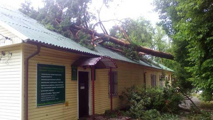 В брянском посёлке Локоть ураган вырвал с корнем деревья