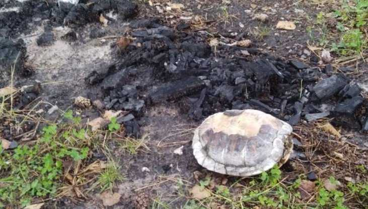 В Дятькове неизвестные живодёры сожгли черепаху
