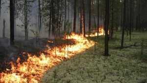 Под Новозыбковом 12 спасателей сразились с лесным пожаром