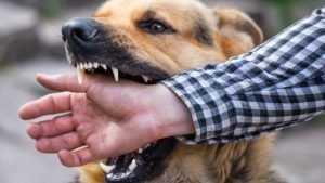 В этом году животные покусали 2230 брянцев