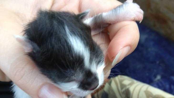 В болоте возле Белых Берегов нашли пакет с живыми котятами