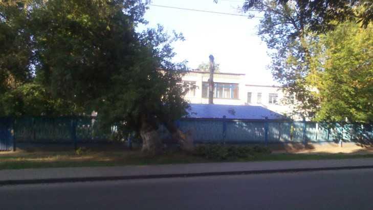 В Брянске сломанное дерево стало угрозой для детсада