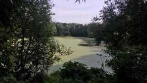 В клинцовском селе Ольховка озеро превратилось в болото