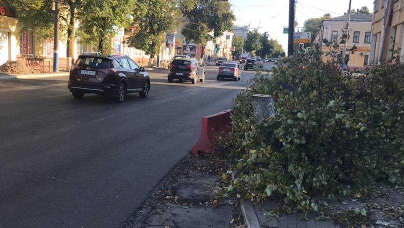 Несколько деревьев спилили в Брянске на улице Калинина
