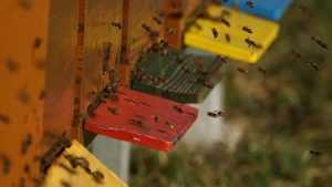 Почему в России начали гибнуть пчелы