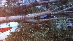 В Брянске легковой автомобиль раздавило рухнувшее дерево
