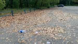 В посёлке Белые Берега парк превратили в свалку