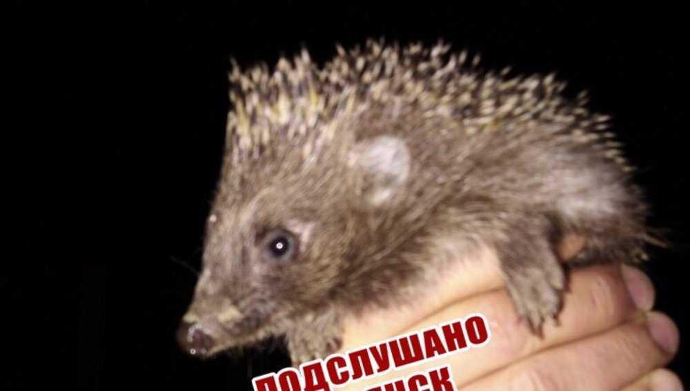 Жителя Брянска в городе укусил дикий ежик