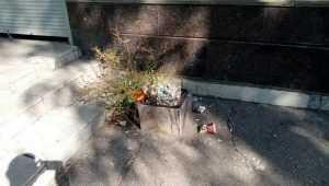 За свой мусор жители Брянска пристыдили администрацию Бежицкого района