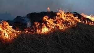 Под Брянском в лесу 14 спасателей потушили горевшую траву