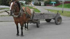 Под Брянском водитель ВАЗ врезался в телегу и ранил 19-летнюю девушку