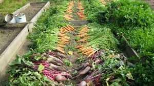 Рекомендации по повышению урожайности