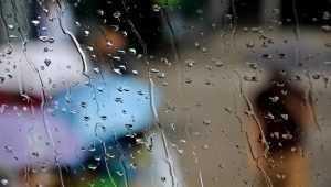 Синоптики прогнозируют в Брянске 1 сентября комфортную погоду