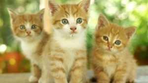 В Брянске на свалку выбросили шестерых котят, двое погибли