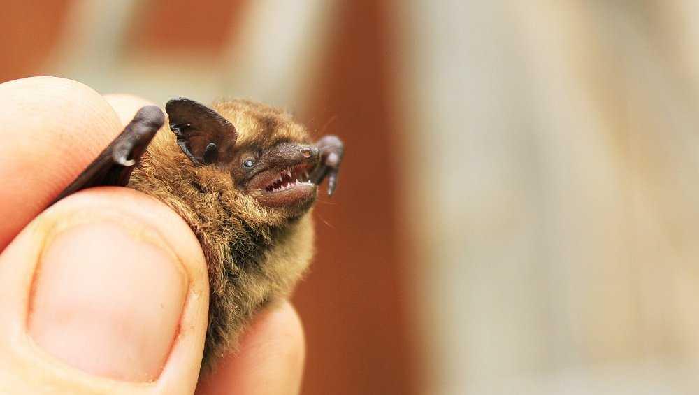 В заповедник «Брянский лес» вернулись летучие мыши