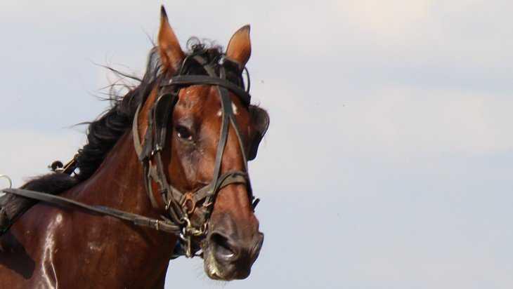 В Брянской области разыграют Кубок губернатора по конному спорту