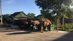 В Брянске лошади устроили себе завтрак возле мусорного контейнера