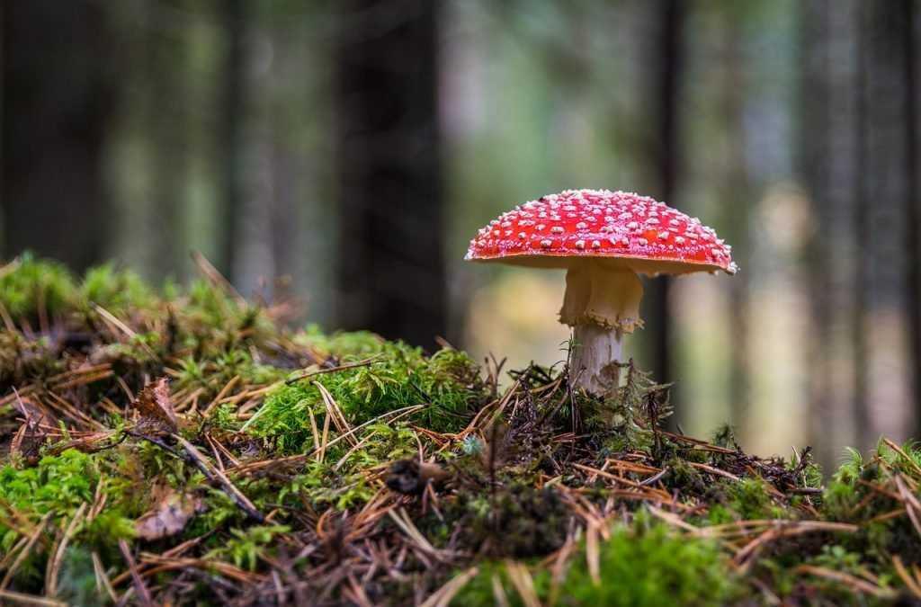 Опасные дары брянского леса