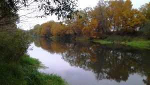 В Брянской области в ночь на 29 августа похолодает до 3 градусов