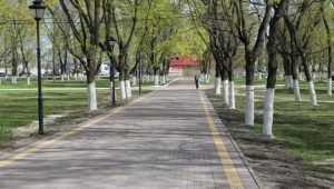 В брянском парке годовалую девочку покалечила упавшая ветка дерева