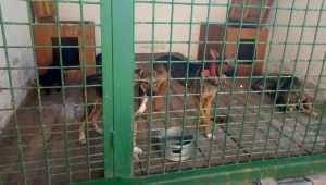 В Володарском районе Брянска построят приют для собак и лошадей
