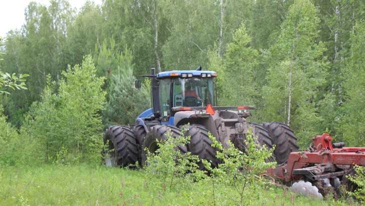 В этом году от березок очистят 50 тысяч гектаров брянской земли