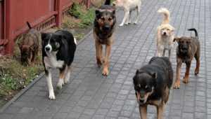 Власти Брянска пообещали отправить бездомных животных с улиц в приют