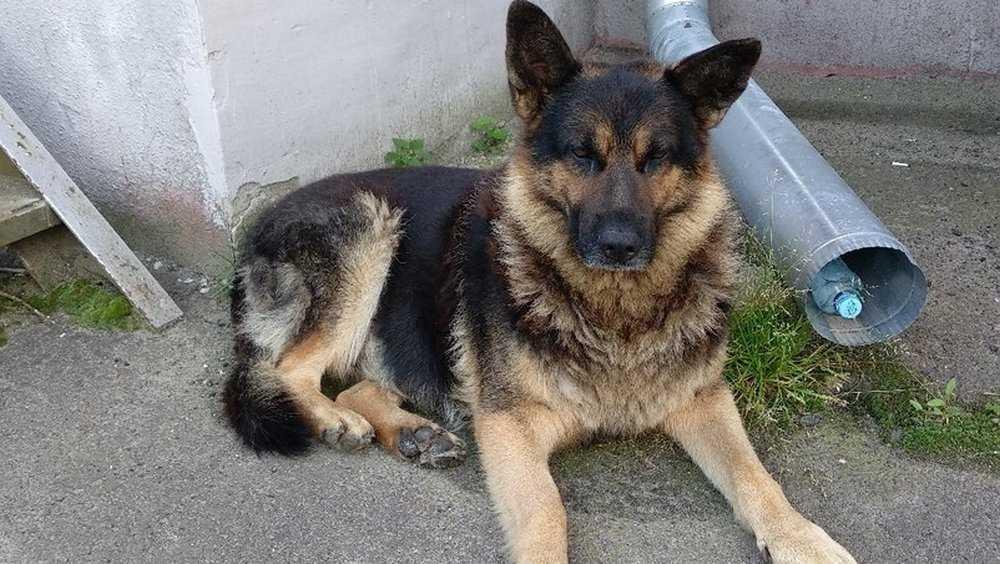 В Брянске из-за легкомыслия девушек пса разлучили с хозяевами