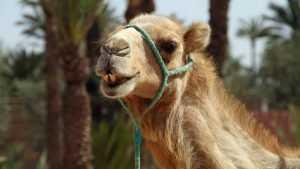 В Брянске коммерсанта наказали из-за выставки экзотических животных