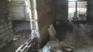 В Почепском районе Брянской области суд закрыл птицефабрику